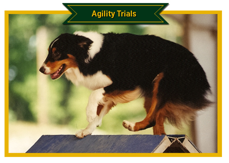 Agility Photos